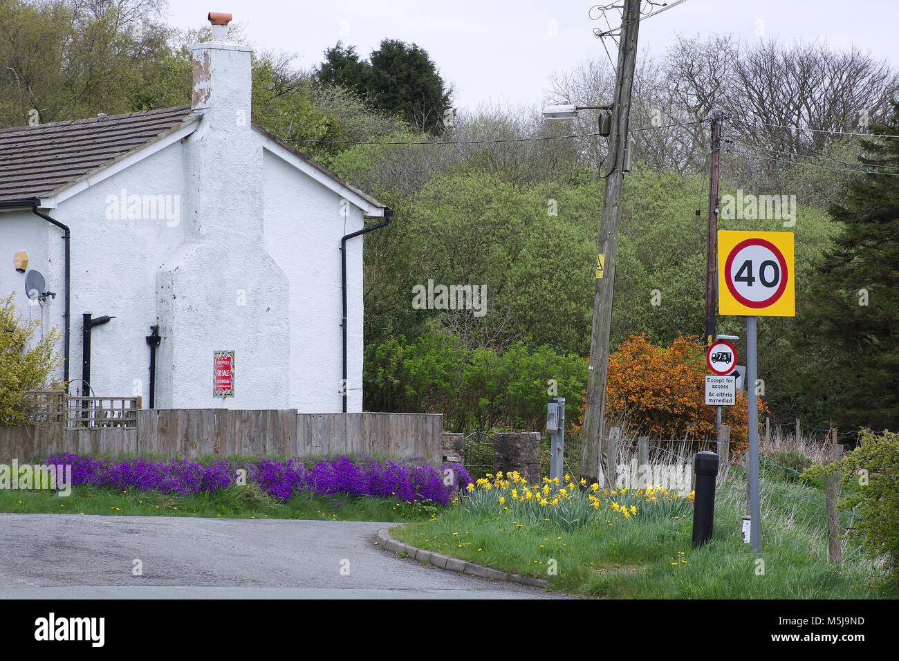 Speed limit sign on British countryside road,North Wales,United Kingdom.White building and flowers on roadside in - Stock Image