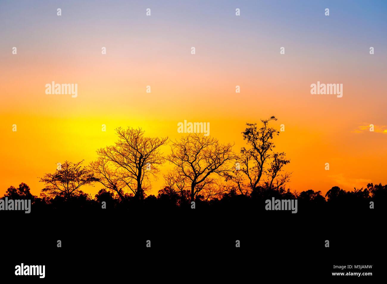 Leafless trees silhouetted against the sky at sunset, Jim Corbett National Park wildlife sanctuary, Ramnagar, Uttarakhand - Stock Image