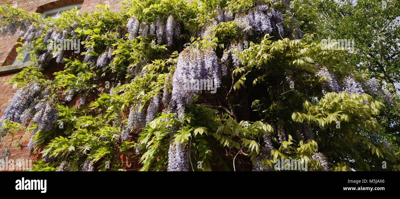 spetchley park gardens worcester worcestershire midlands, england, uk - Stock Image