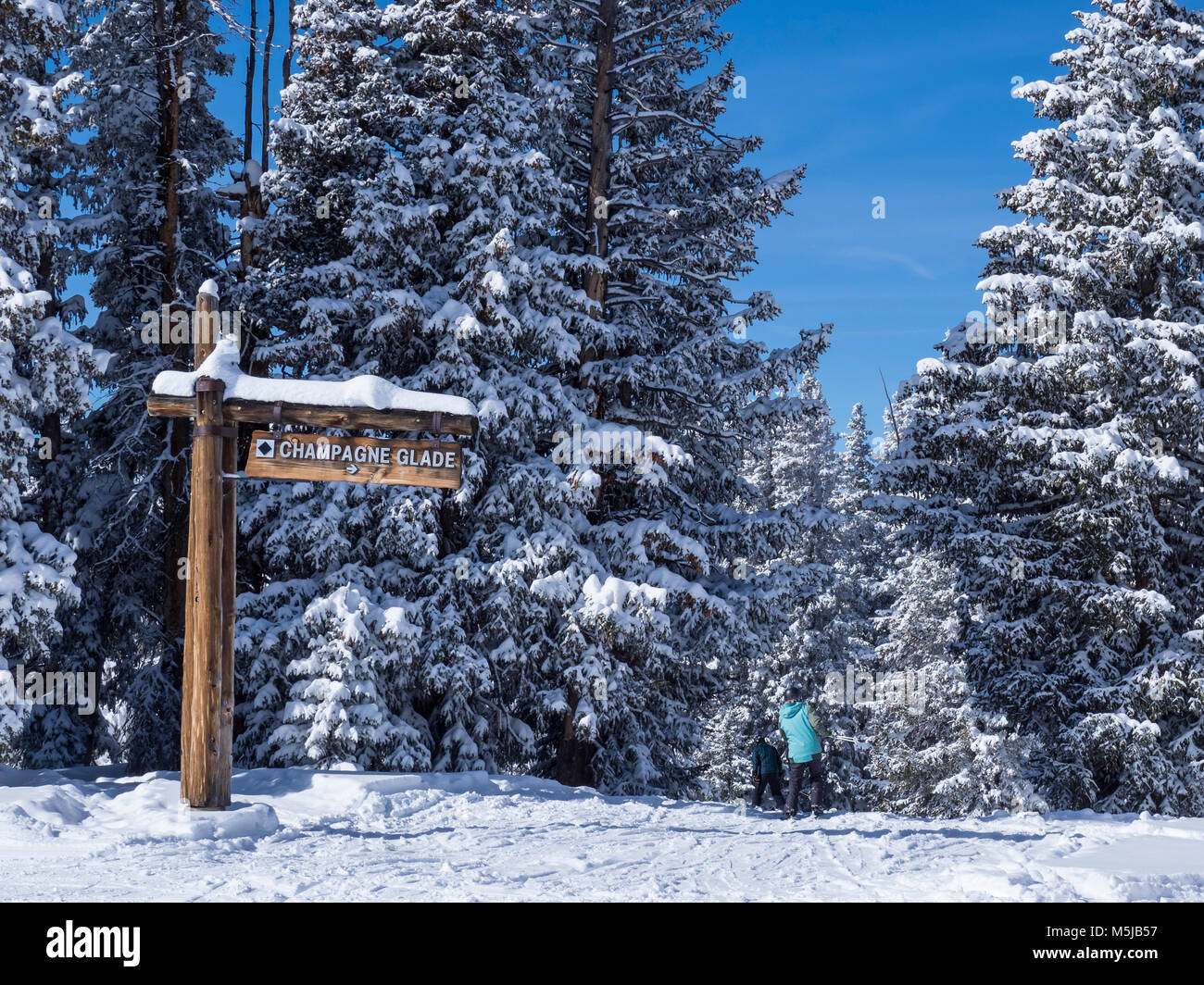 Top of the Champagne Glade Trail, Belle's Camp, Blue Sky Basin, winter, Vail Ski Resort, Vail, Colorado. - Stock Image