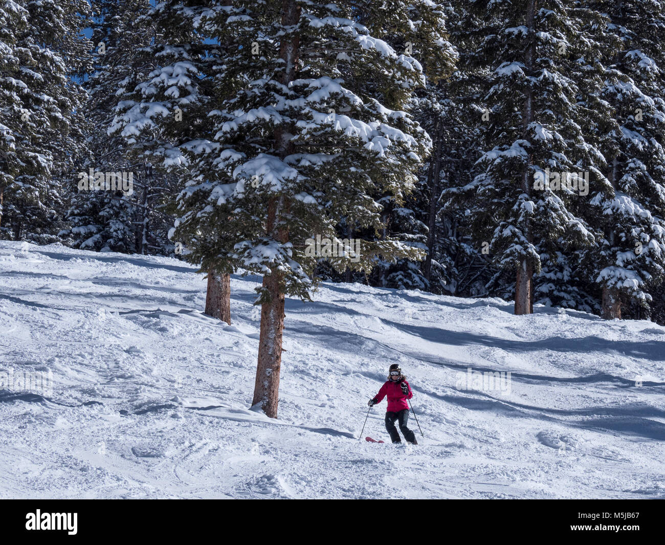 Skier skis The Star trail, winter, Blue Sky Basin, Vail Ski Resort, Vail, Colorado. - Stock Image