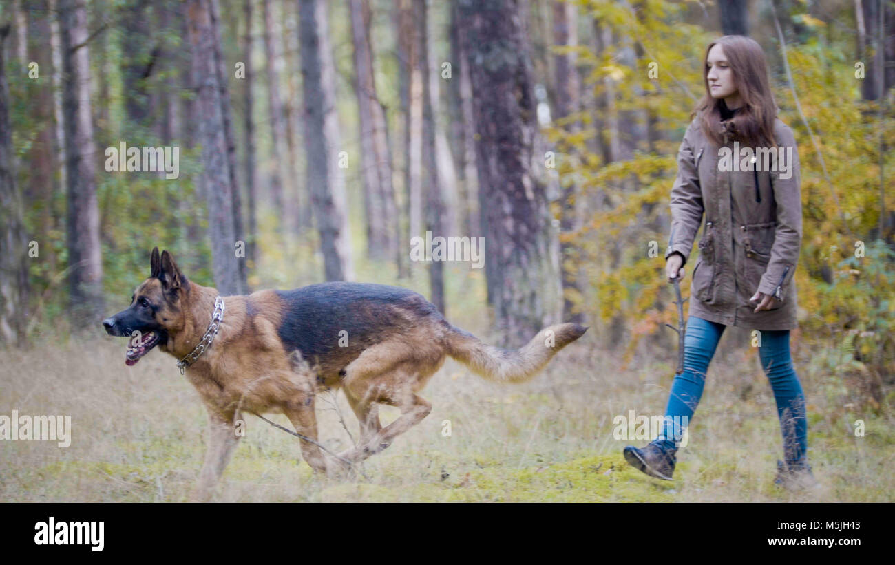 Young pretty attractive woman playing with her pet - german shepherd - walking on a autumn forest - girl throws - Stock Image
