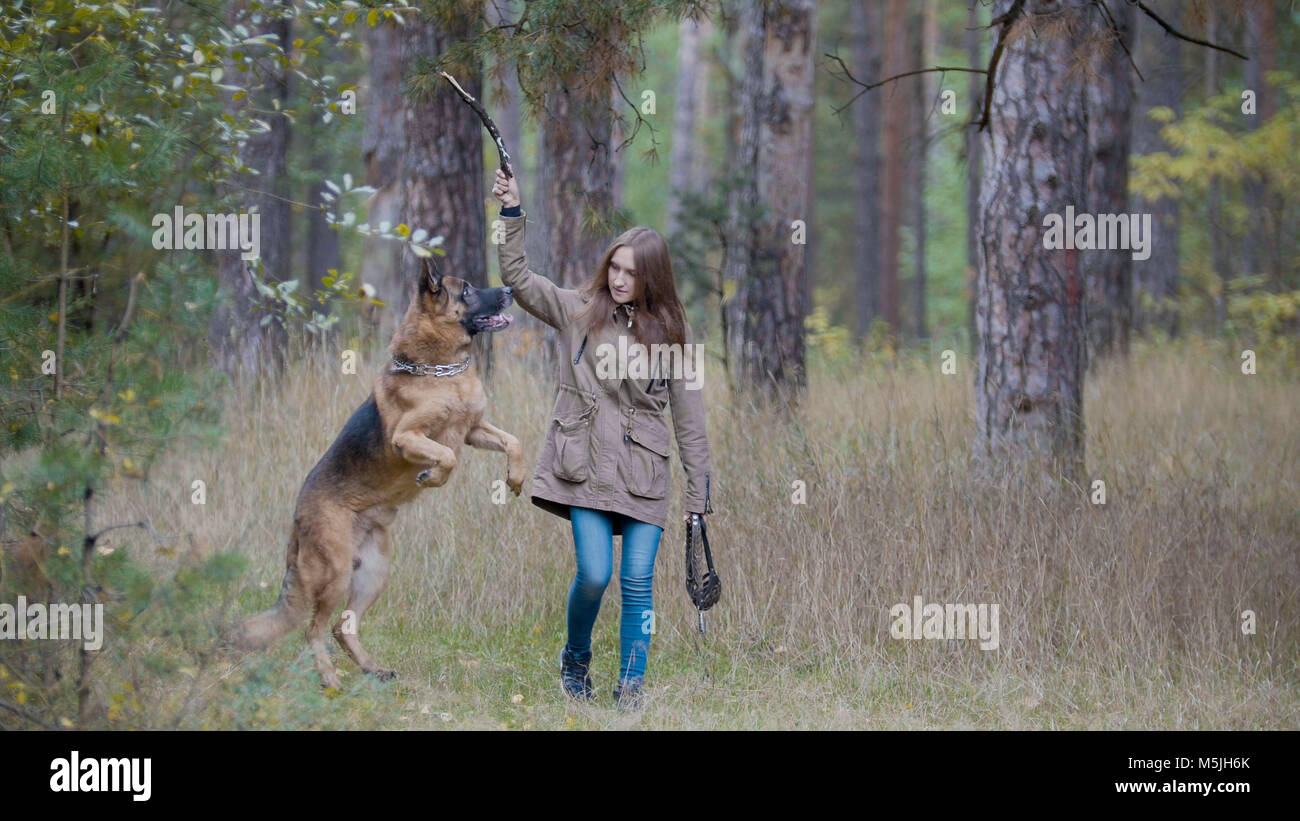Young pretty female model playing with her pet - german shepherd - walking on a autumn forest - girl throws the - Stock Image