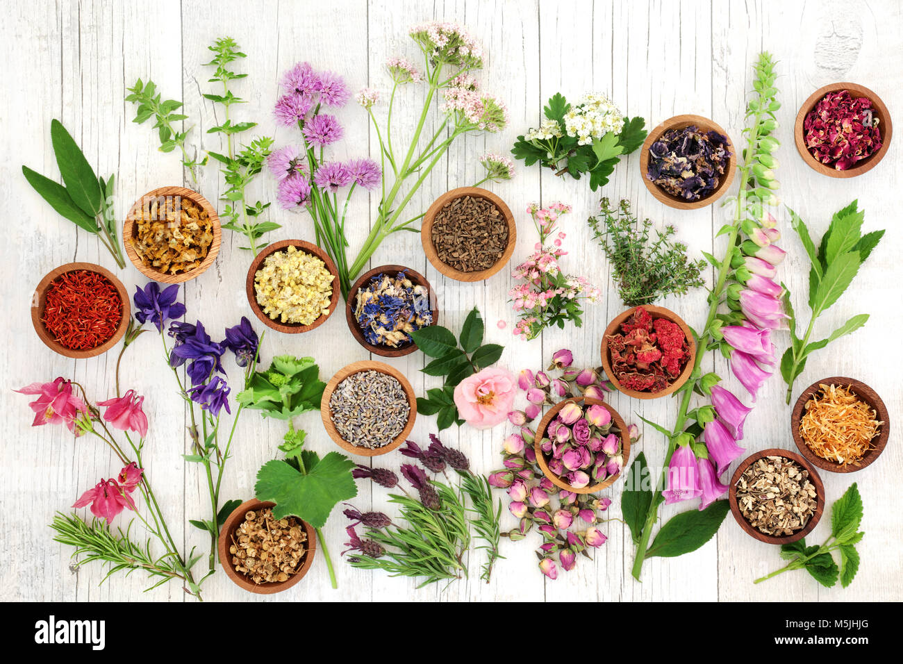 Herbs and flowers used in natural herbal medicine on rustic white wood background. - Stock Image