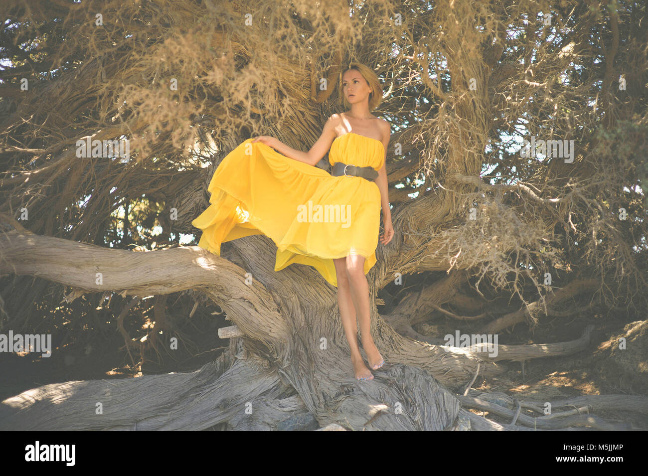 Beautiful young lady in yellow dress with mighty tree - Stock Image
