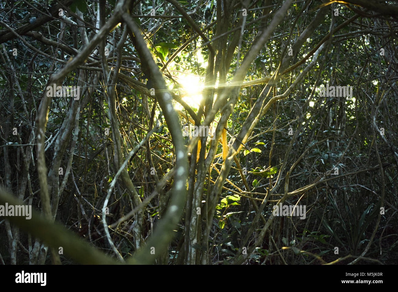 Sunset in the middle of rain forest - Stock Image