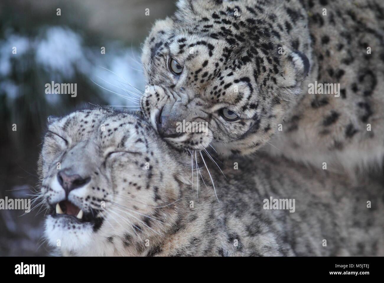 Tama Zoological Park,Tokyo - Stock Image