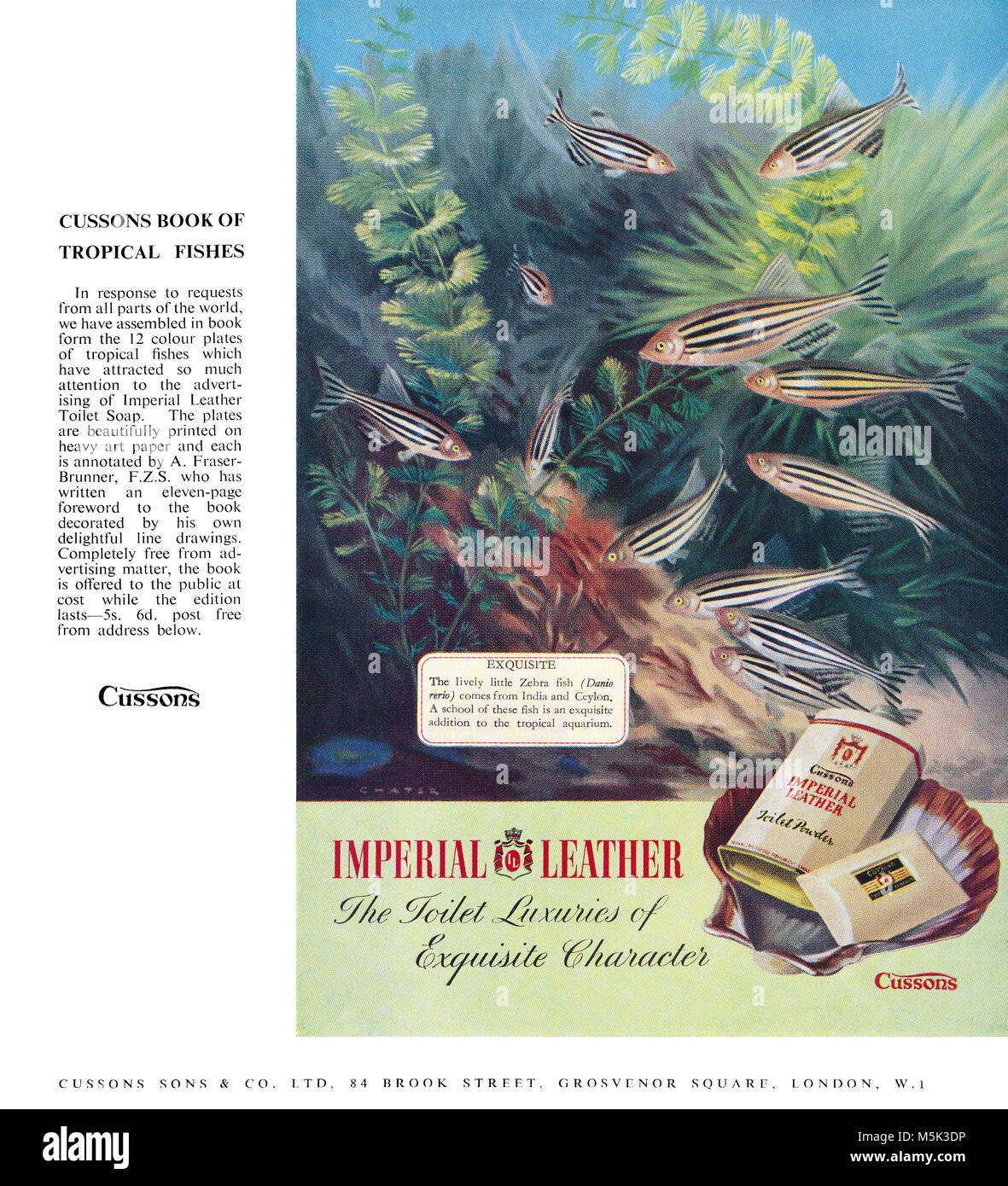 1950 British advertisement for Cussons Imperial Leather toiletries, featuring an illustration of Zebra Fish (Danio - Stock Image