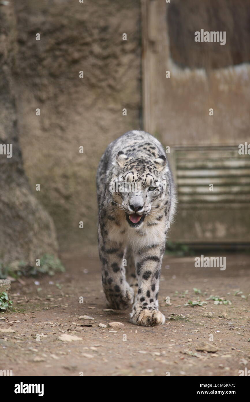 Tama Zoological Park,Tokyo - Stock Image