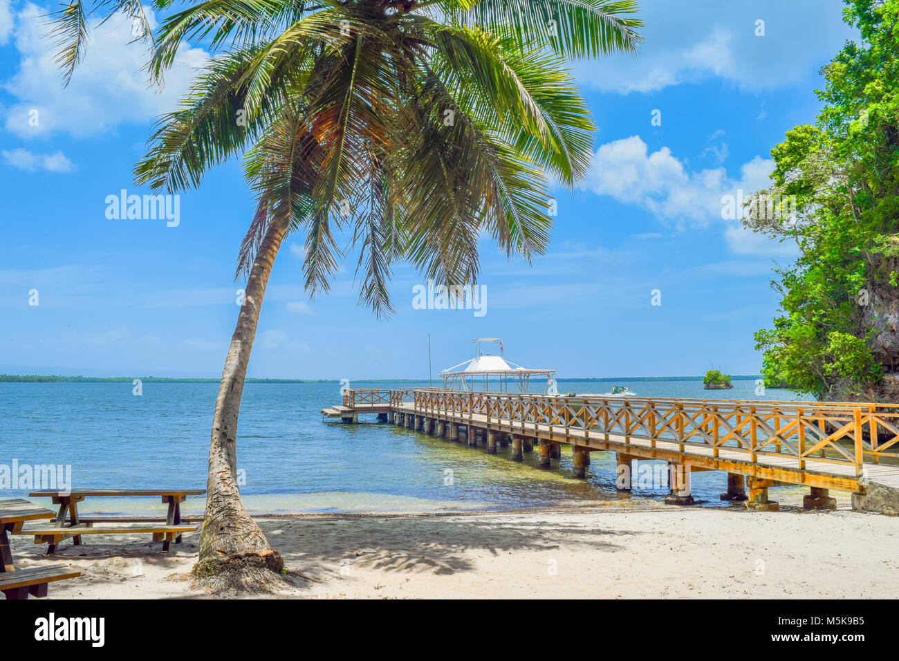 Sandy beach with a big palm and small bridge in caribbean Sea, Dominican Republic - Stock Image
