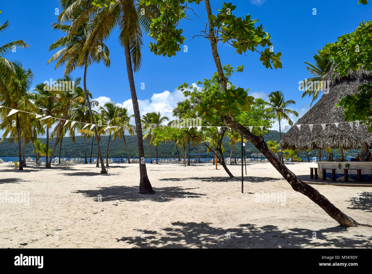 White beach with sunbeds, many palms, blue sky and a beach bar in the caribbean sea, Dominican Republic - Stock Image