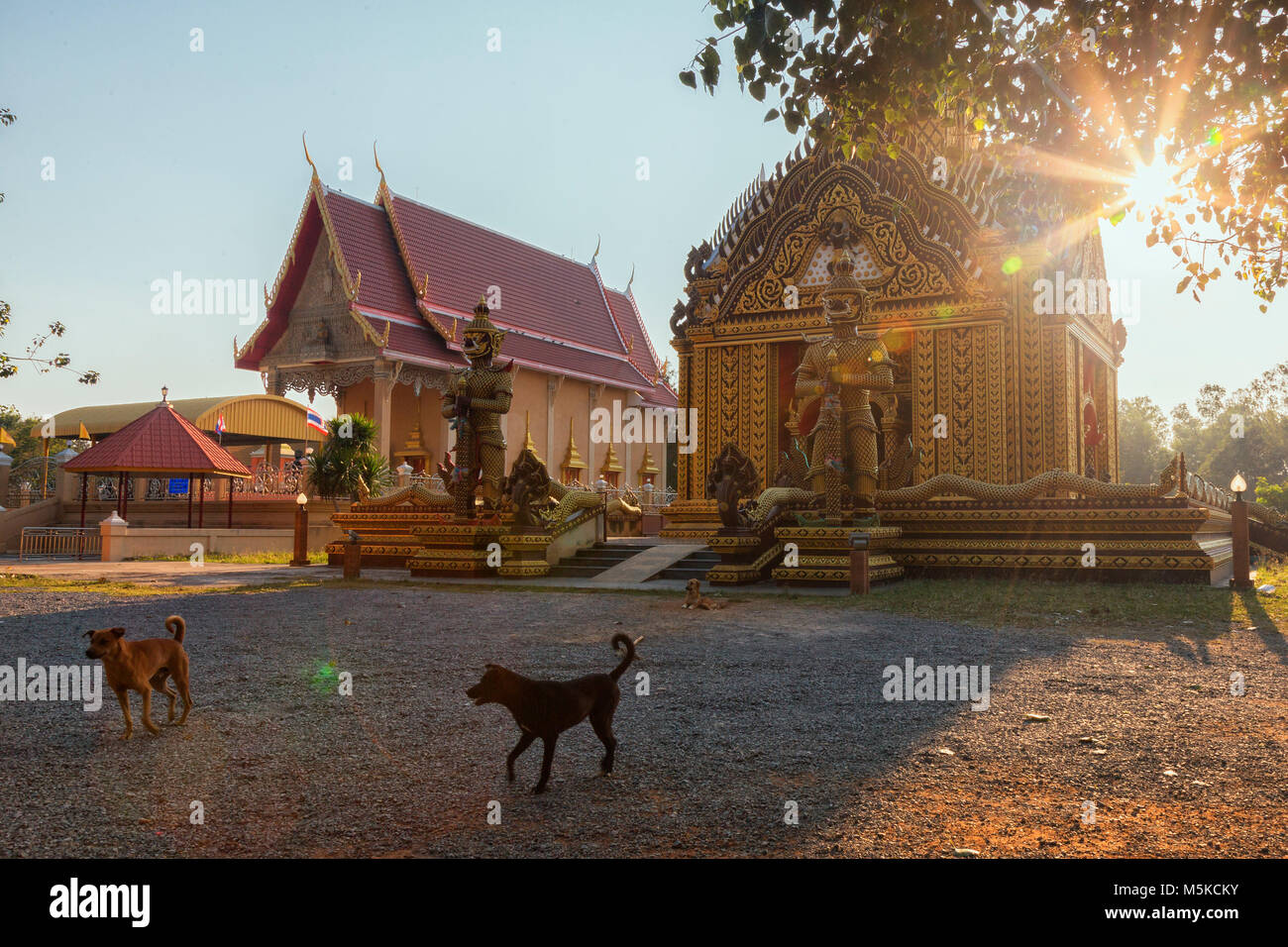 stray dogs at a buddhist temple in southern Thailand Stock Photo