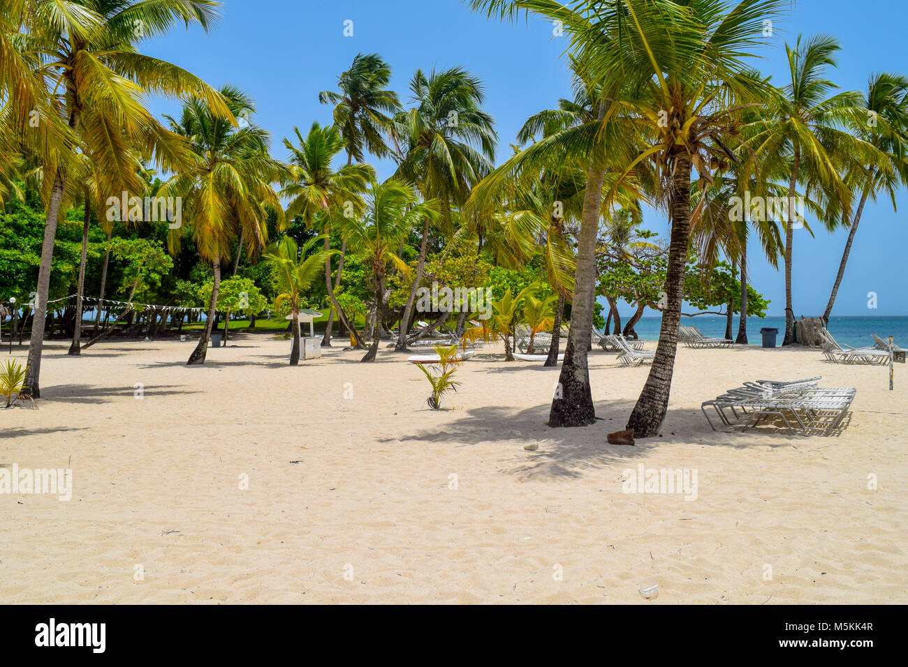 White beach with sunbeds, many palms, blue sky and turquoise ocean in the caribbean sea, Dominican Republic - Stock Image