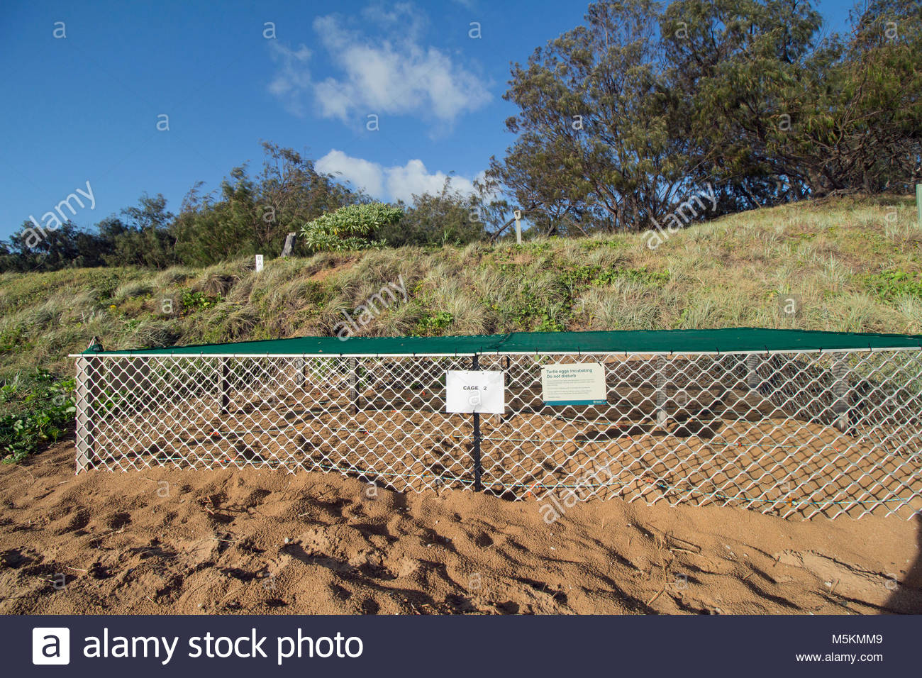 A cage built to protect relocated sea turtle nests from preditors and the heat of the sun. Mon Repos Beach in Australia. - Stock Image
