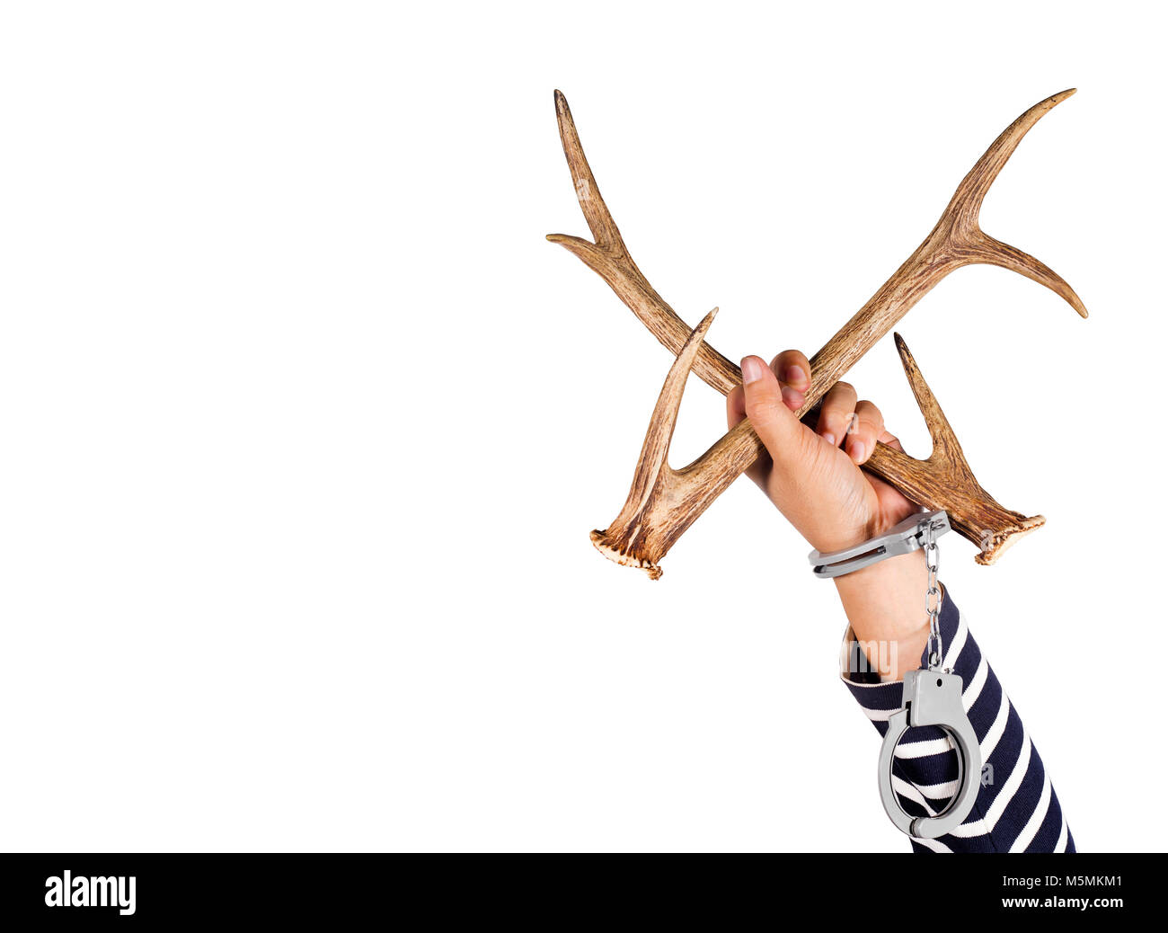 Horn and shackle.Concept of criminal acts and the illegal wildlife trade. - Stock Image