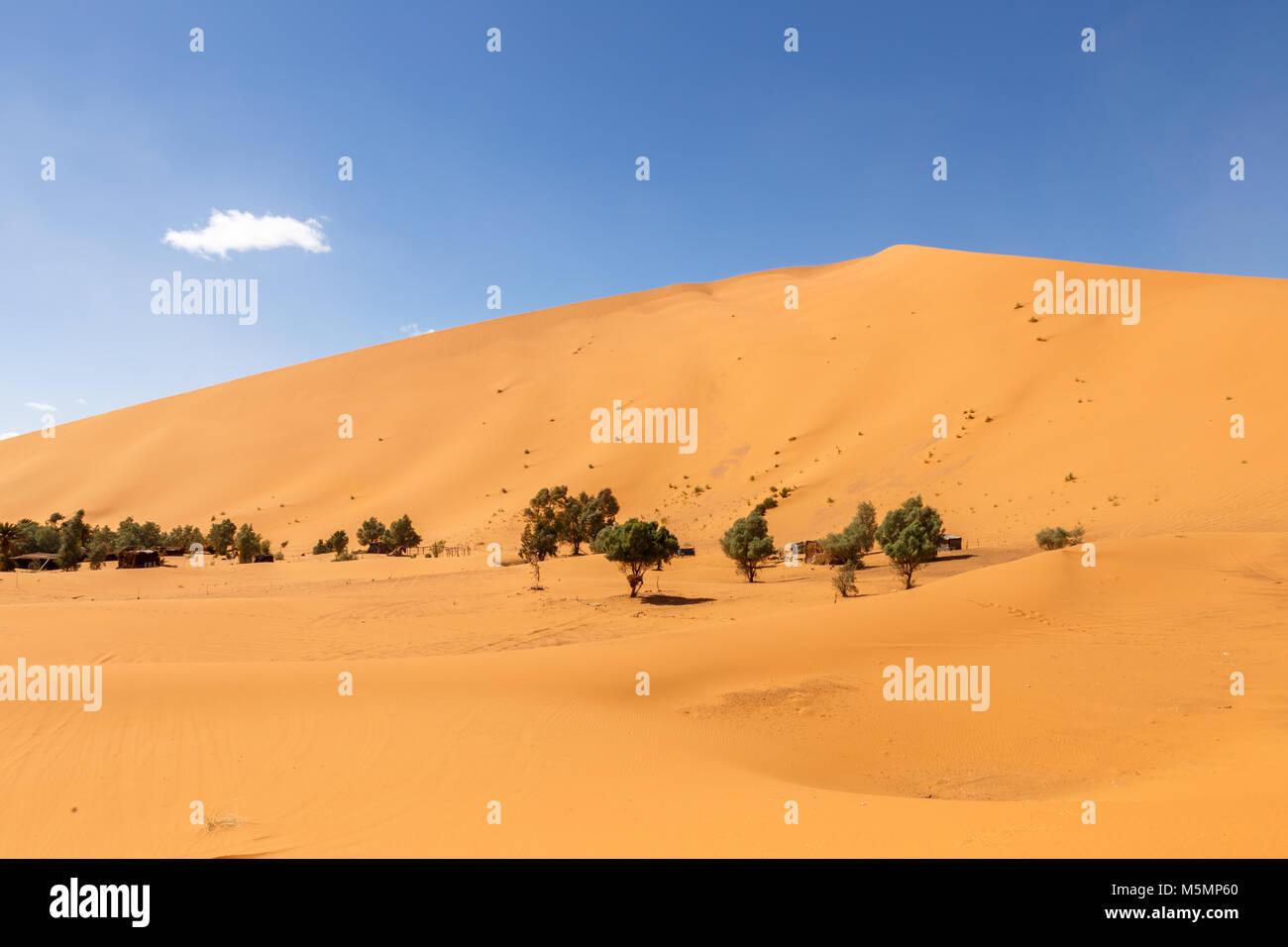 oasis in the Sahara desert, Erg Shebbi dunes - Stock Image