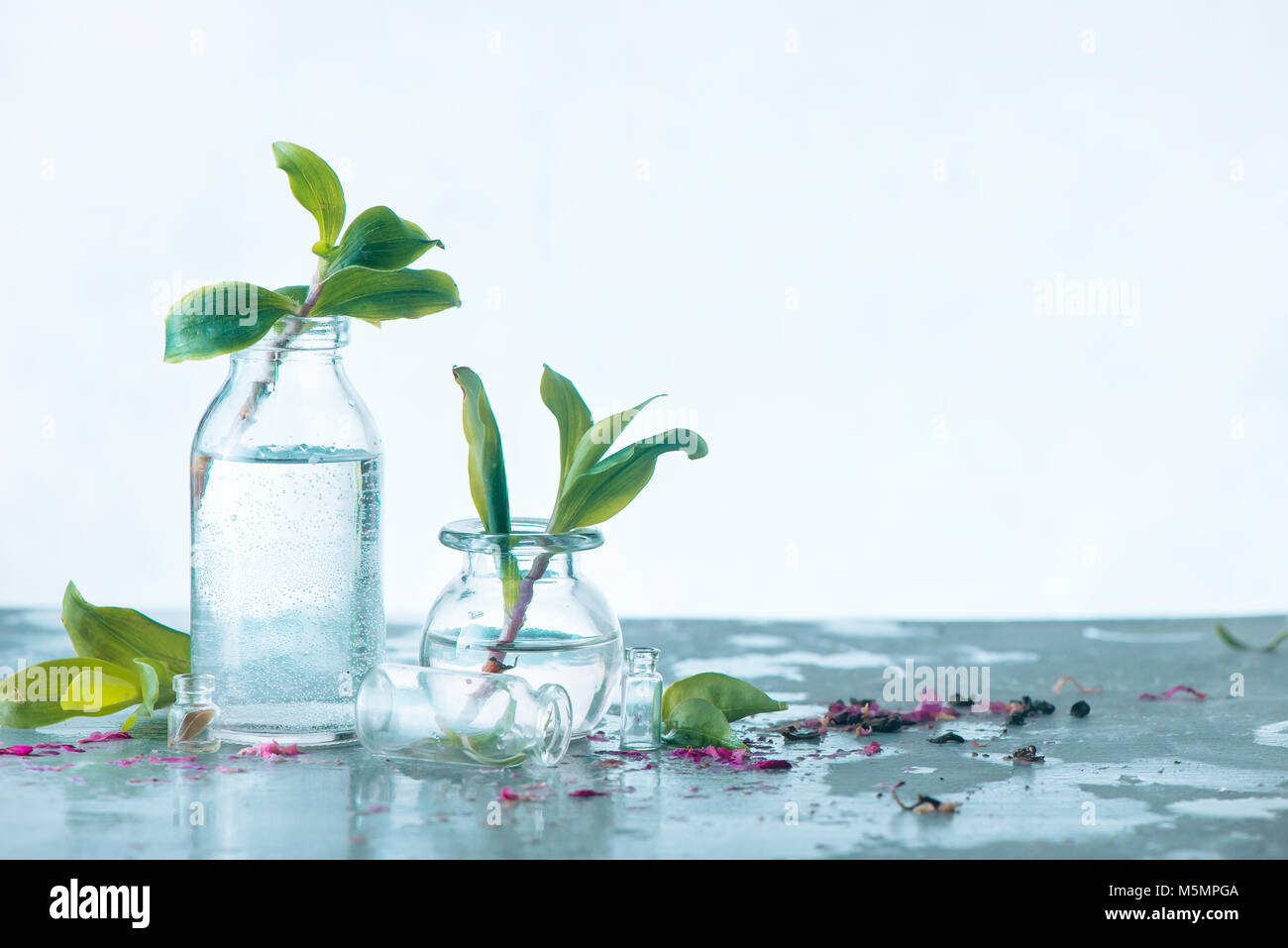 Two bottles with fresh green leaves on a concrete background. Spring concept with copy space. Minimalist still life - Stock Image