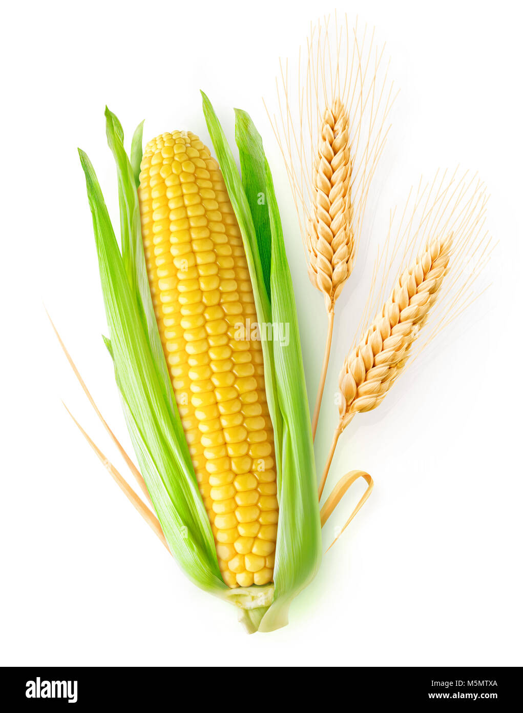 Isolated cereals. One ear of corn and two ears of wheat with leaves isolated on white background with clipping path - Stock Image