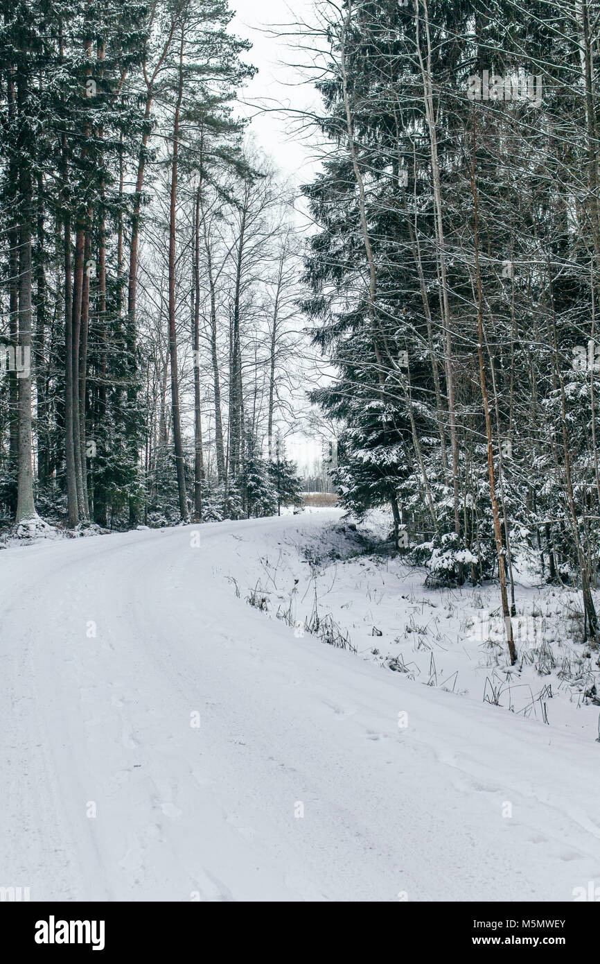 A path through the forest covered with snow. - Stock Image