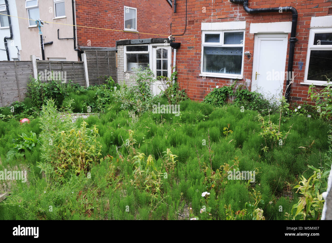 Overgrown and neglected garden. Stock Photo