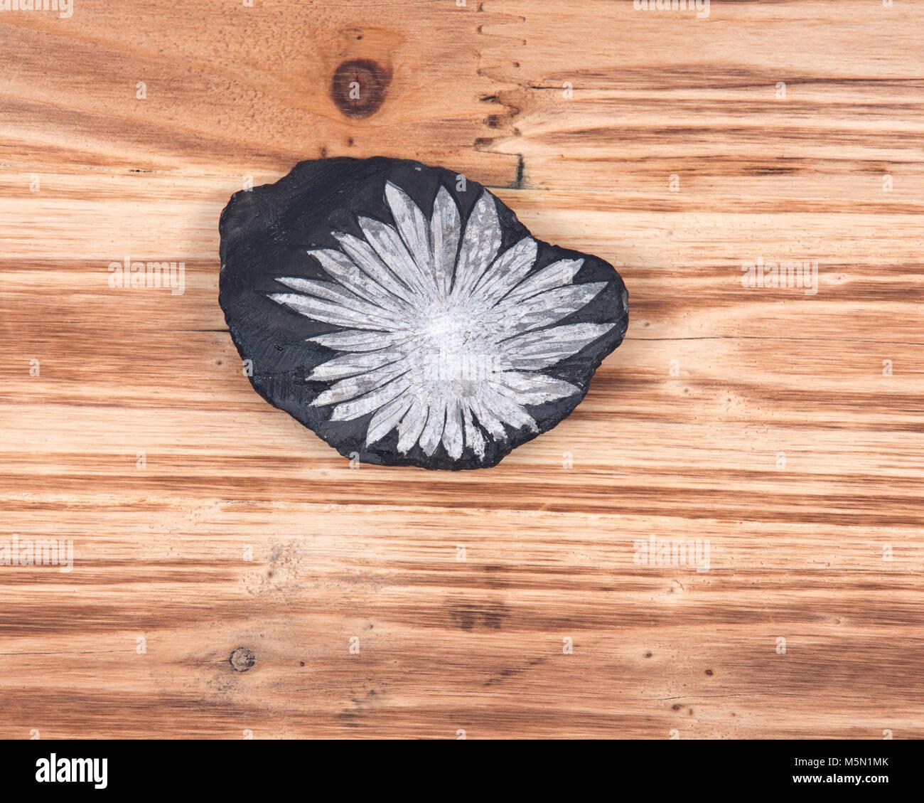 The white flower  Chrysanthemum stone on vintage wooden background - Stock Image