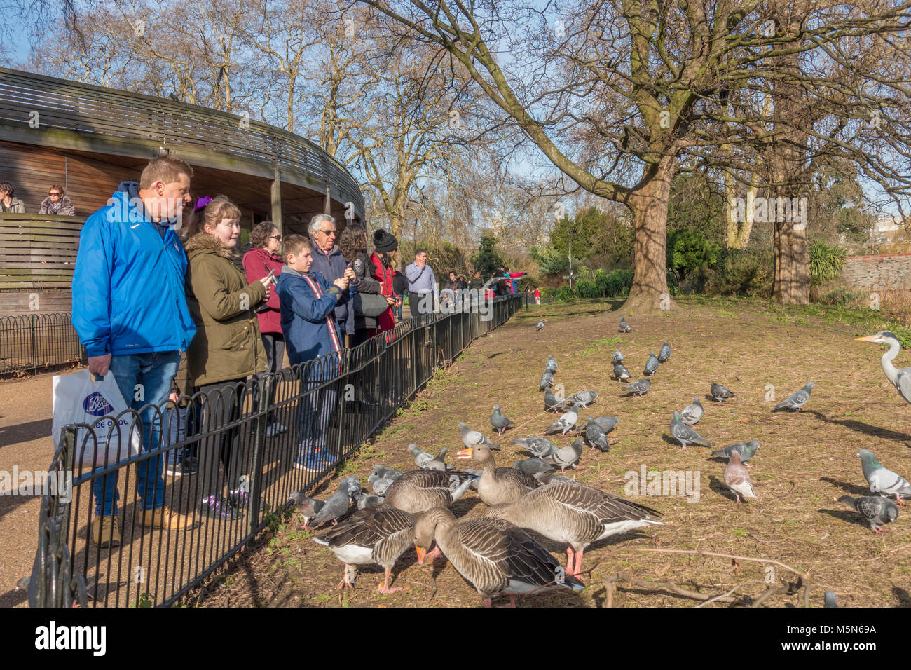Group of visitors to St James's Park, standing by a fence watching the resident pigeons, geese and heron expecting - Stock Image