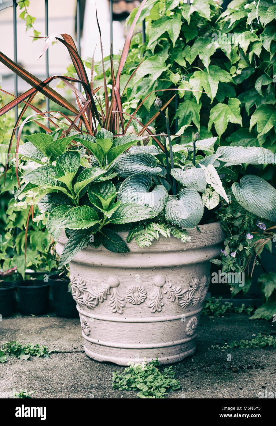 Various Ornamental Green Plants In Flower Pot With Hosta And Red