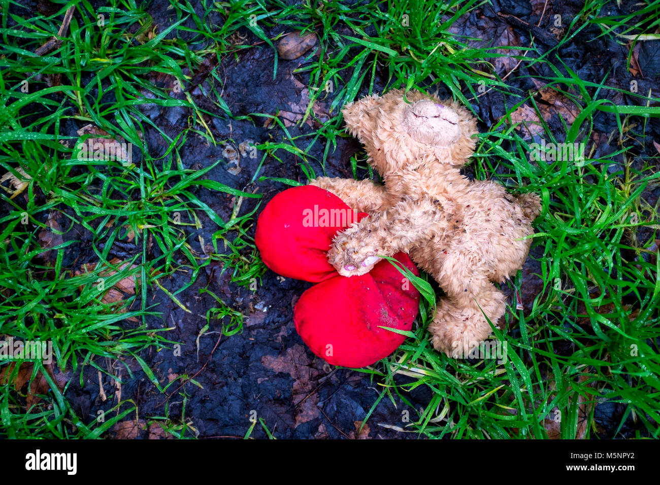 Discarded Valentine's day teddy bear lying on the ground - Stock Image