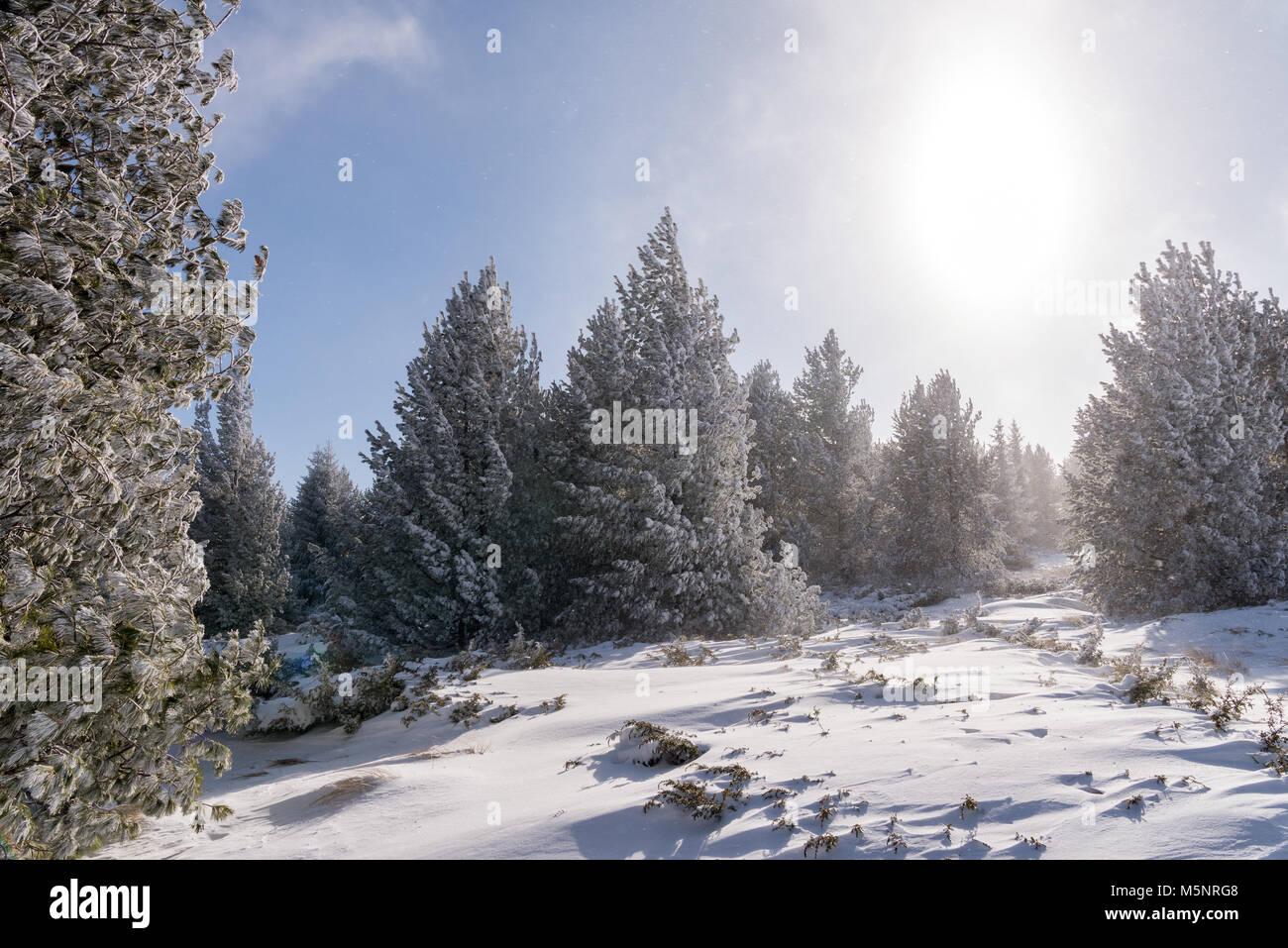 Windy Stormy Weather Snow Stock Photos & Windy Stormy