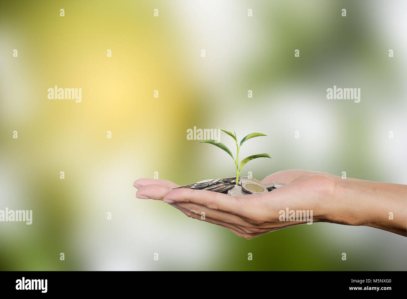 Hand holding coins with growing tree with copy space. Tree growing on Thai coins. Investment growing money for future - Stock Image