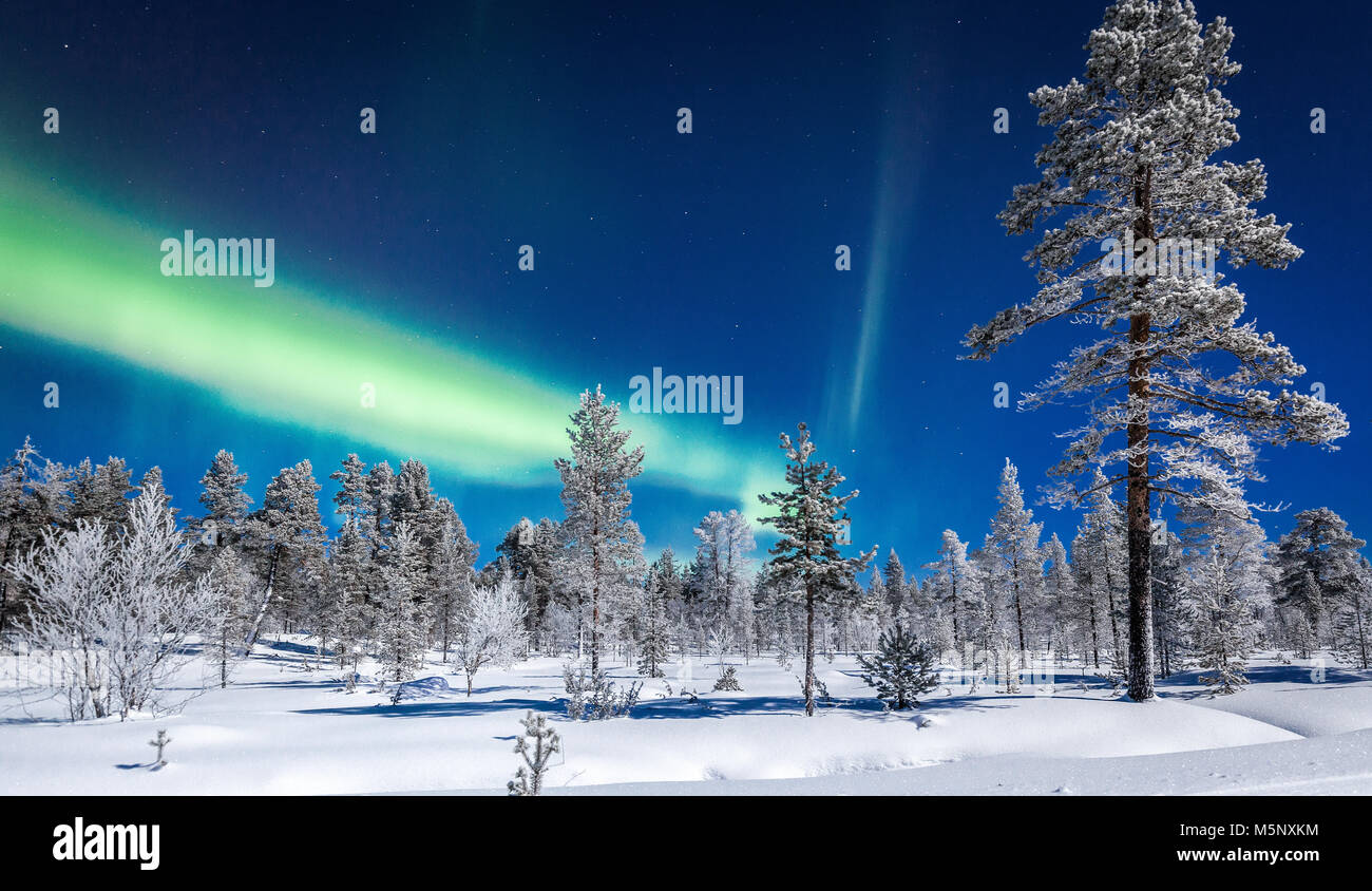Amazing Aurora Borealis northern lights over beautiful winter wonderland scenery with trees and snow on a scenic cold night in Scandinavia Stock Photo