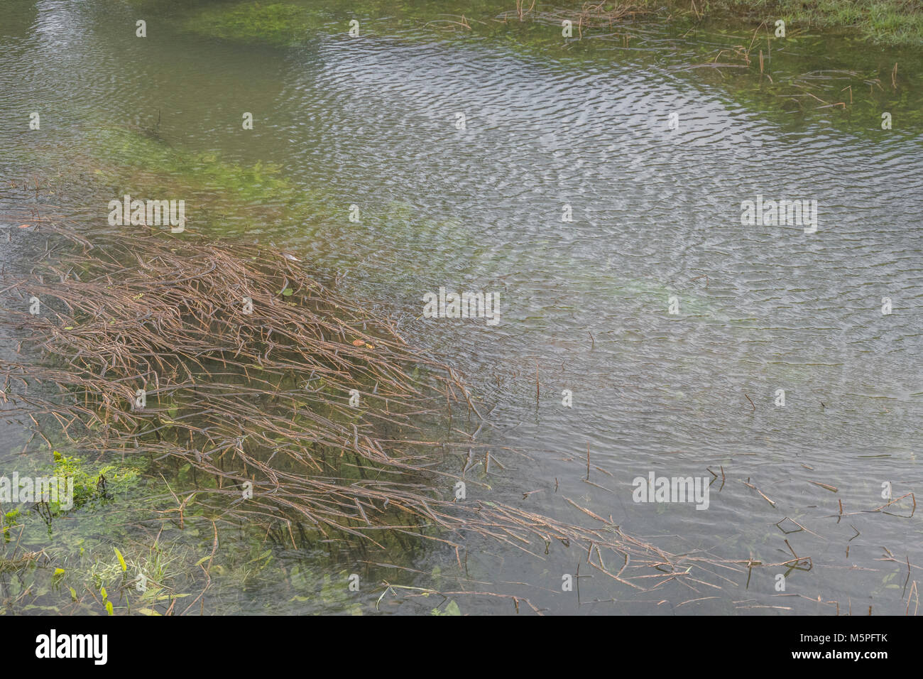 Sky reflected in breeze rippled water of a waterway. - Stock Image