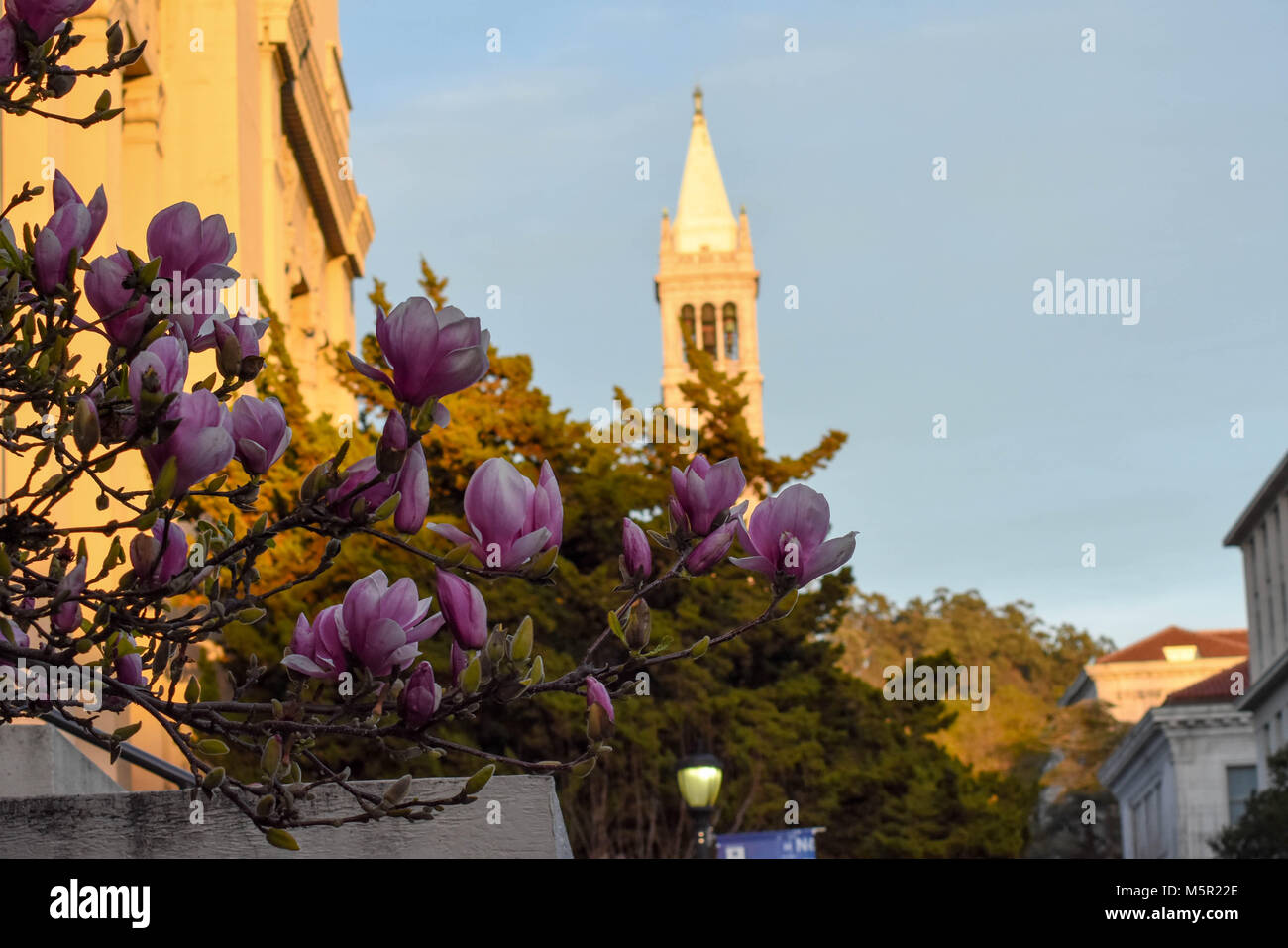 UC Berkeley's stunning campus contains natural and architectural beauty in equal measure. - Stock Image