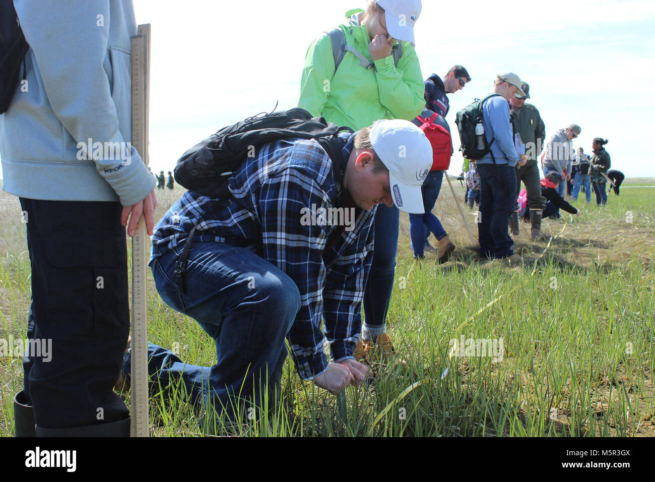 IMG . A student from Minuteman High School takes a salt marsh core sample at Cape Cod NS. - Stock Image