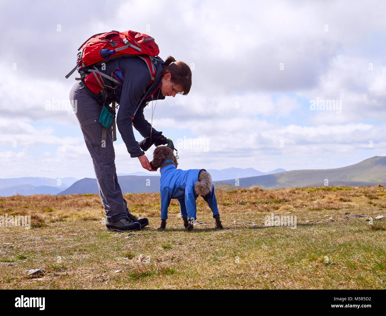A hiker feeding their dog some biscuits to keep their energy levels up on a long walk in the English Lake District, - Stock Image