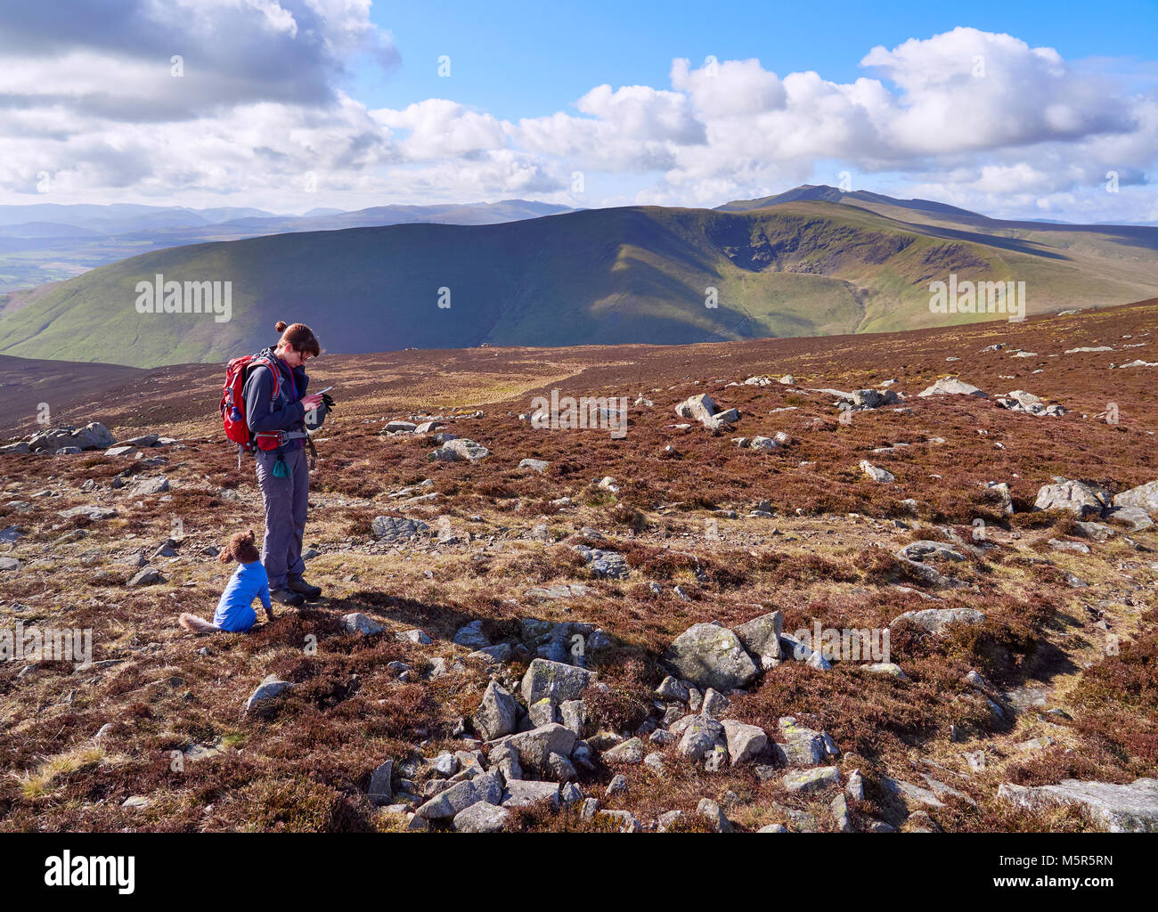 A hiker checking their position on a GPS map near the summit of Carrock Fell with views of Bowscale Fell and Blencathra - Stock Image