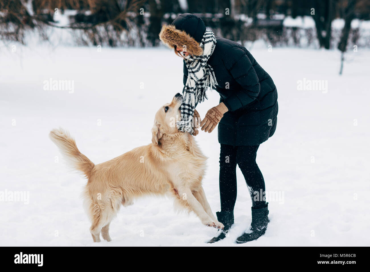 Photo of woman in black jacket with retriever walking in winter park - Stock Image