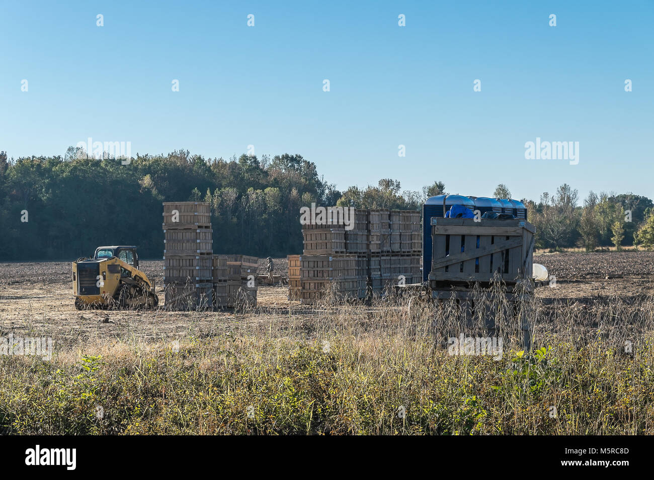 A large number of agricultural crates used for storing sweet potatoes from field to processing plant. - Stock Image