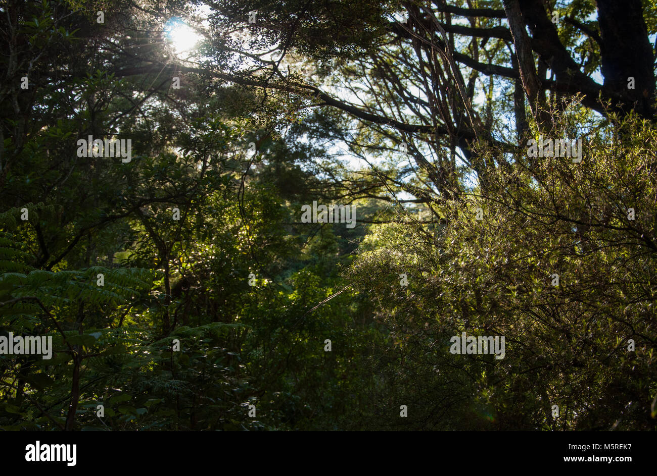 Bush Walk - Stock Image
