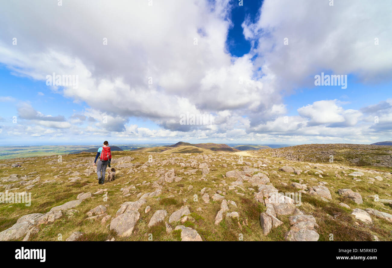 A female hiker and their dog walking off the summit of Great Borne towards Loweswater Fell. The English Lake District, - Stock Image
