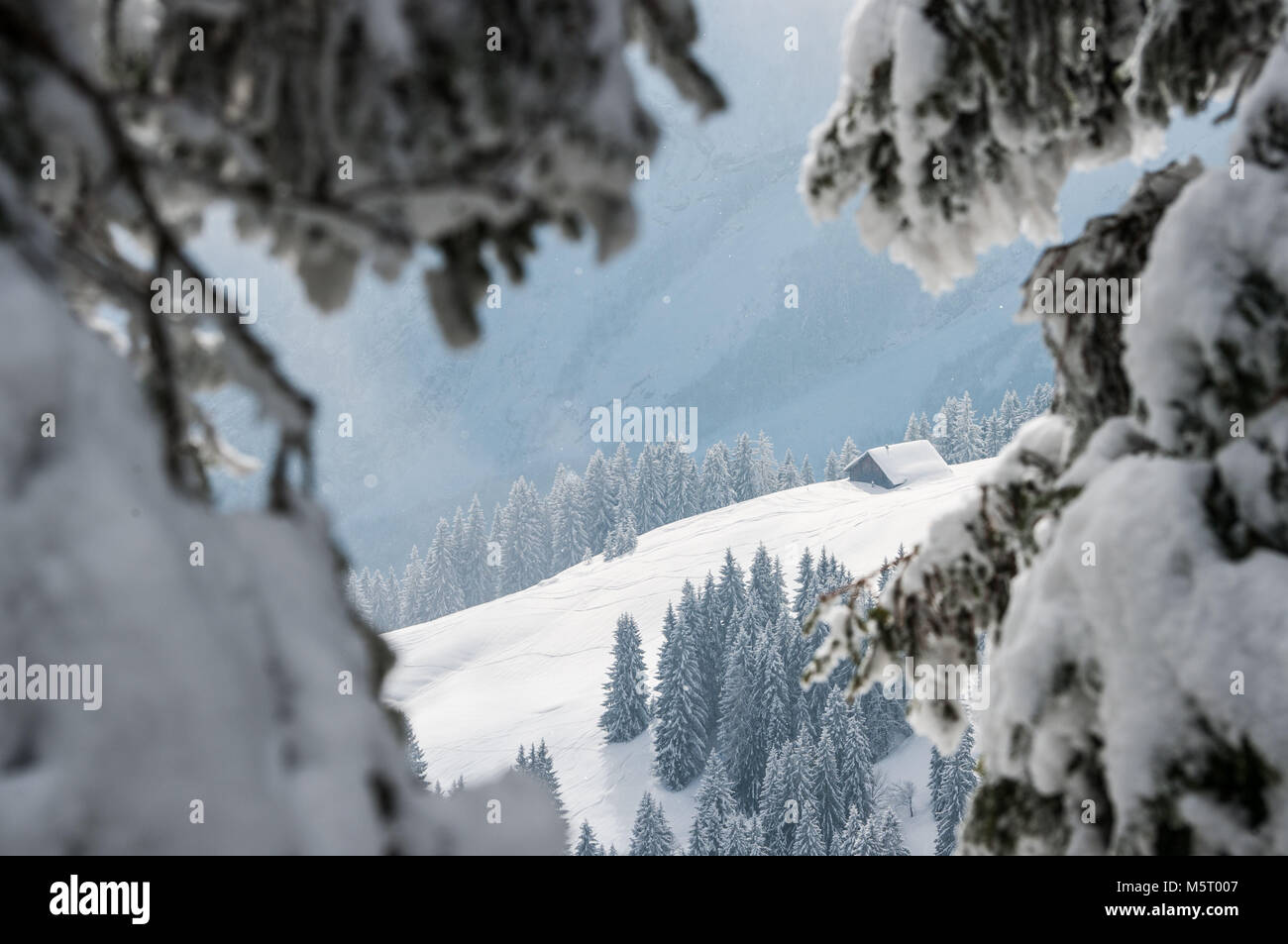 25 February 2018, Germany, Eck: Ice cristals, snow and fog cover the frozen forest and landscape of Bavaria. Photo: - Stock Image