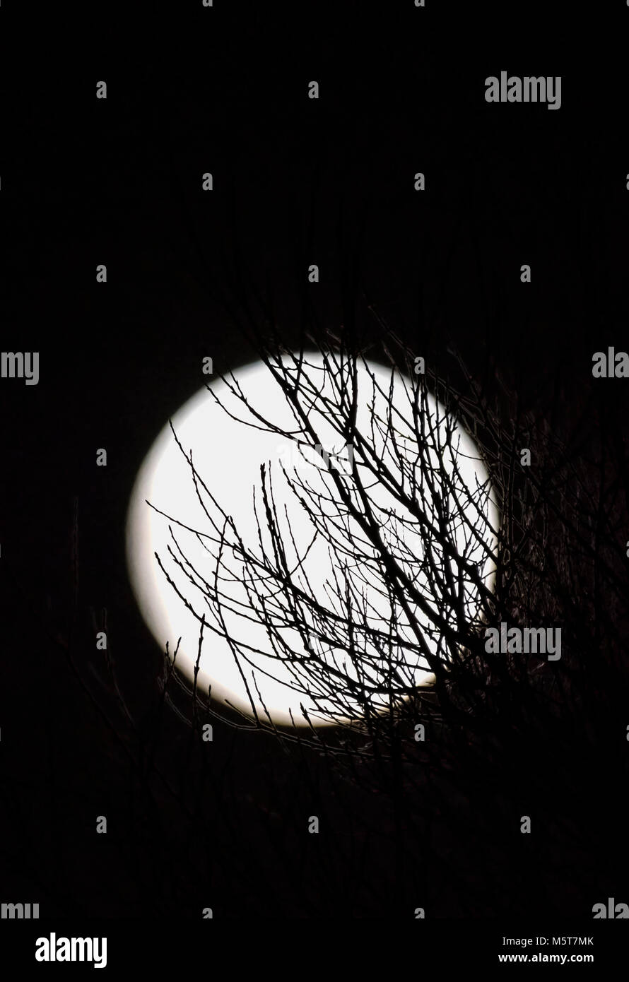 Supermoon through trees on 1st January 2018 taken from the south of England, UK. Full moon at night in Winter. Portrait - Stock Image