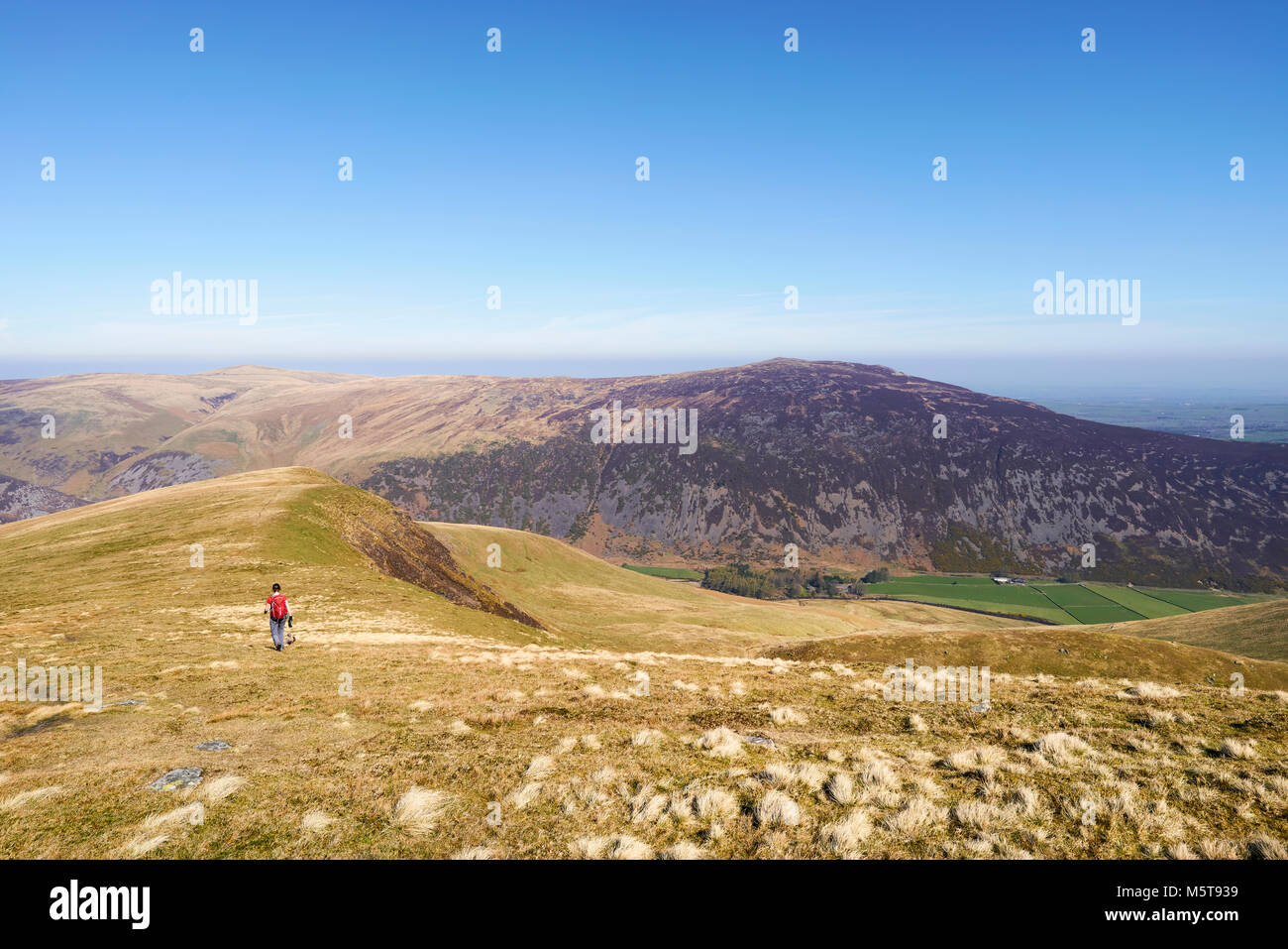 A female hiker walking off the summit of Bowscale Fell in the English Lake District, UK. - Stock Image