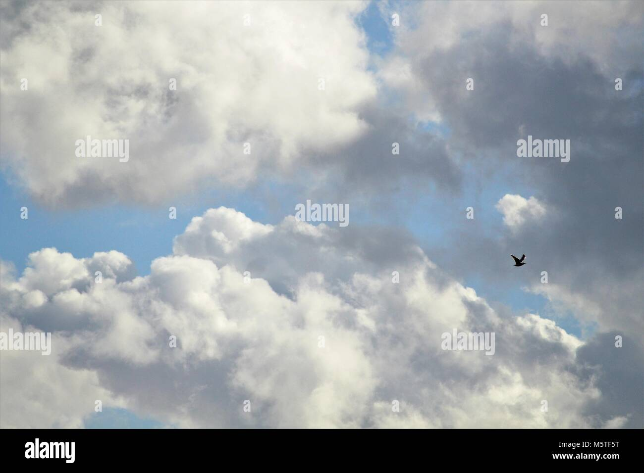 Solitary bird flying through cloudscape - Stock Image