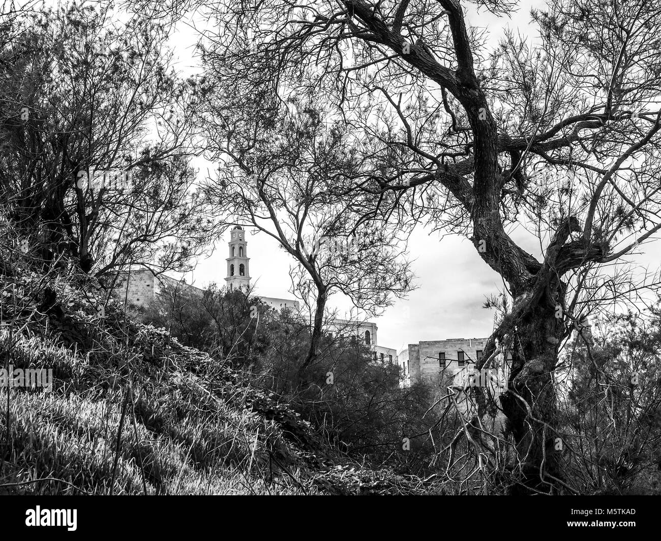 St. Peter's Church between trees in Tel Aviv, Old Jaffa, Israel - Stock Image