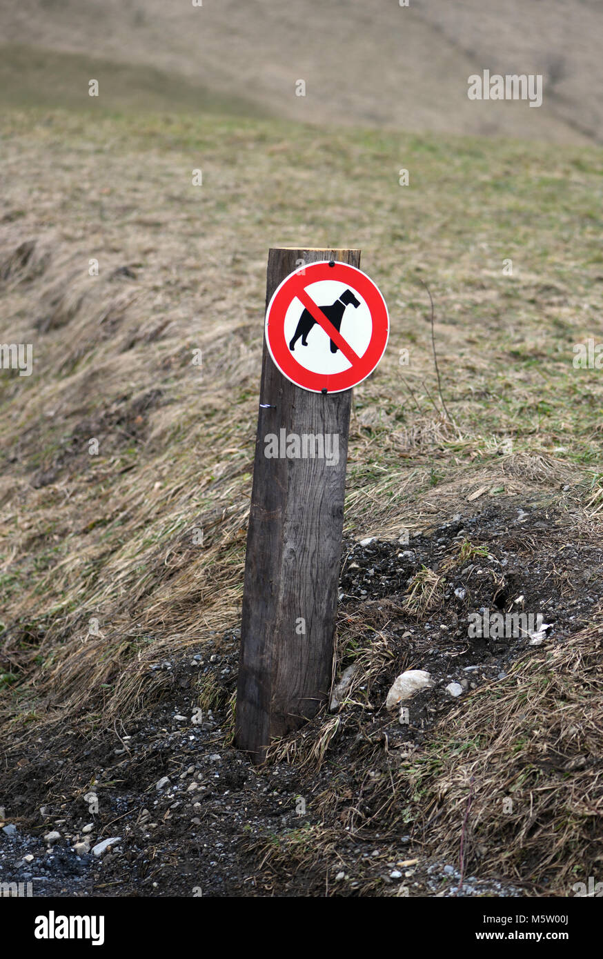 A sign with a pictogram showing no dogs beside a track. Samoens, Haute Savoie, France. - Stock Image