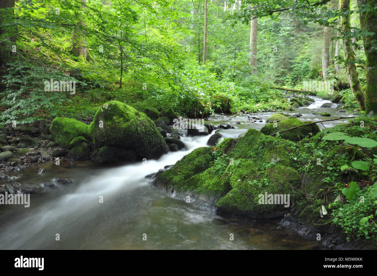Beautiful streams and forests of the Black Forest, Germany - Stock Image