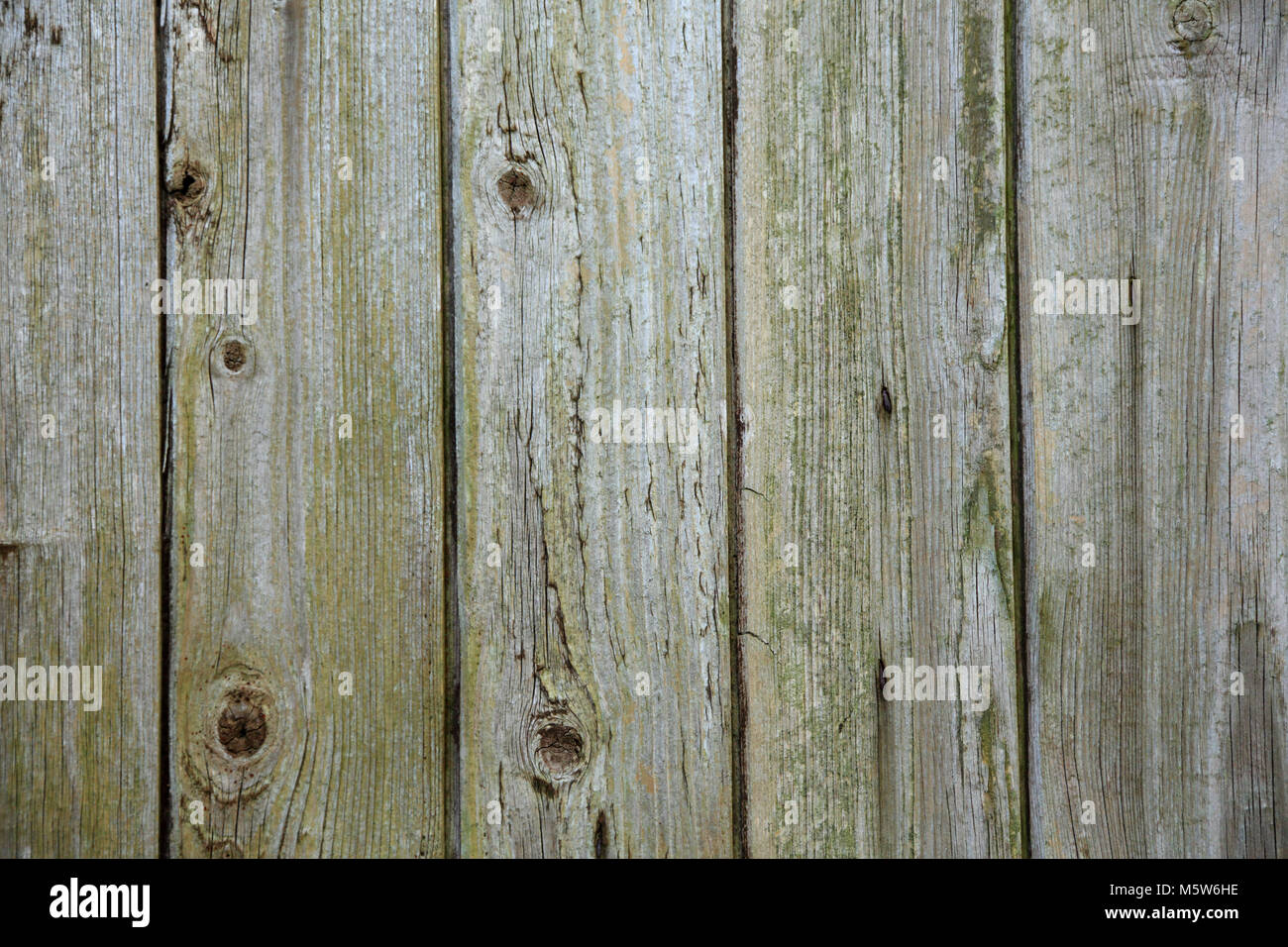 Unprotected weathered wood - Stock Image
