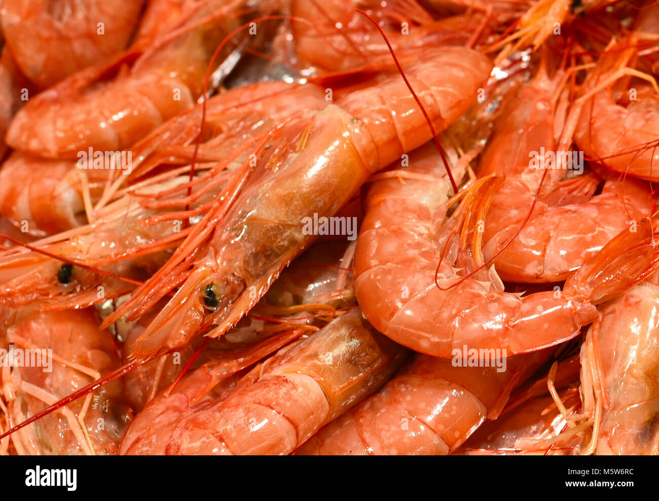 Ice cooled shrimp or king prawns on a fish market stall. Heap of cooked jumbo shrimps, food background, healthy - Stock Image