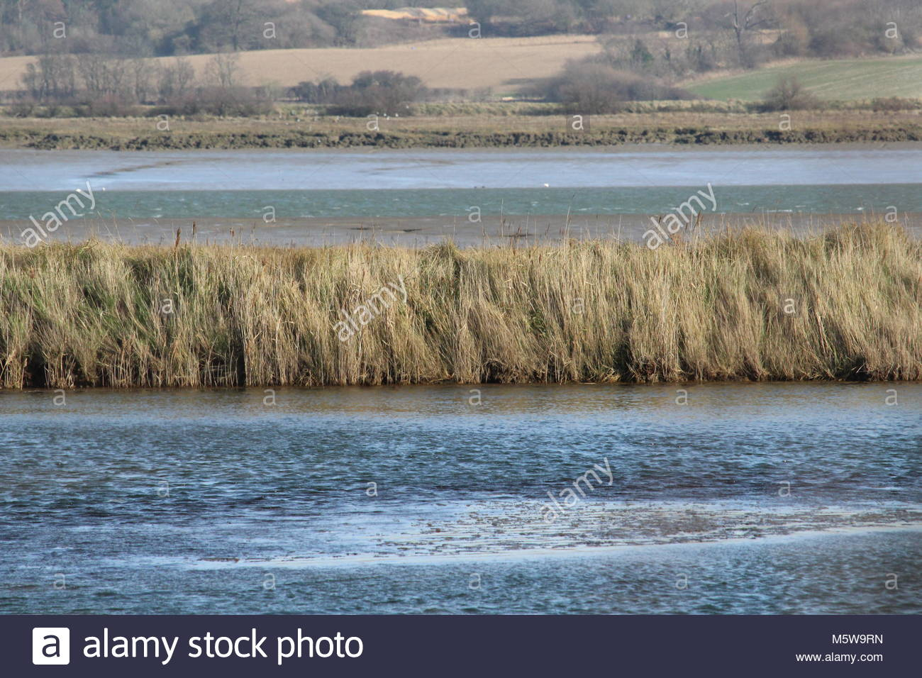 Landscape towards Brightlingsea overlooking Colne Estuary, Colchester in Essex - Stock Image